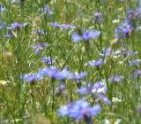 fiorita-castelluccio-di-norcia
