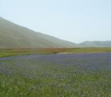 fiorita-pian-grande